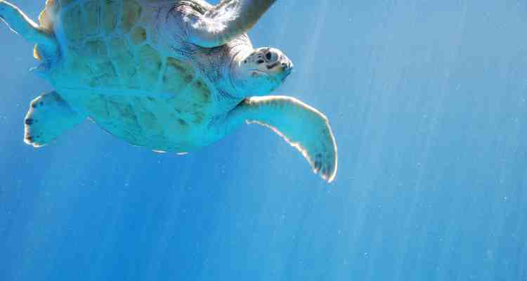 00 Meeresschildkroete Curacao Sea Aquarium