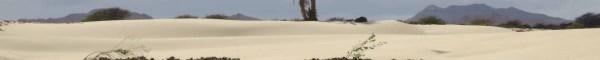 00 Palme Wüste Deserto de Viana Boa Vista Cabo Verde Kapverden
