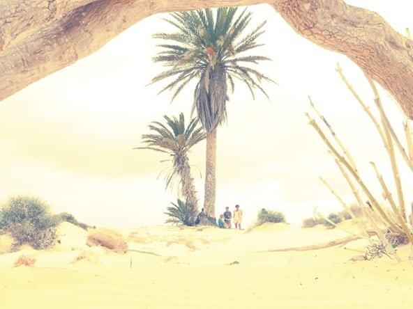 08_Oase-Palme-Wueste-Deserto-Viana-Boa-Vista-Cabo-Verde-Kapverden