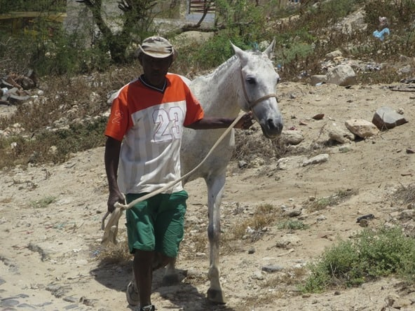 11_Cowboy-Pferd-Boa-Vista-Kapverden