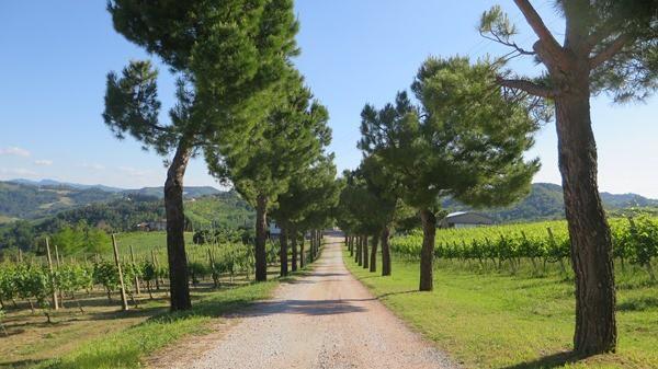 13_Weg-zum-Weingut-Neri-Emilia-Romagna-Italien
