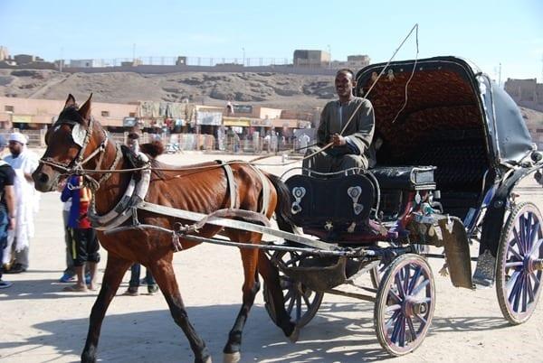 Edfu Pferd Kutscher Fiaker Ägypten Nil Nilkreuzfahrt