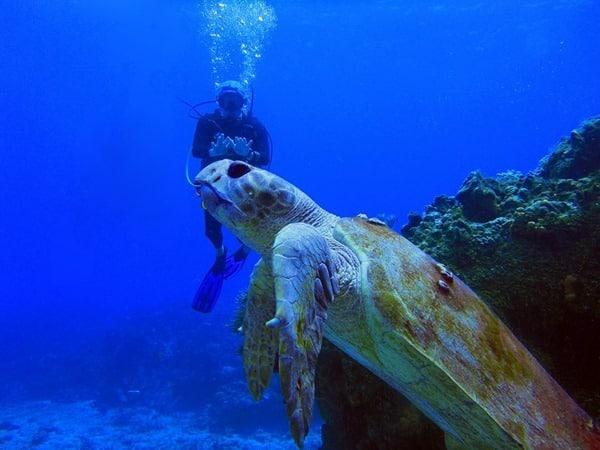 12_Tauchen-im-Meer-mit-Meeresschildkroete-Mexiko