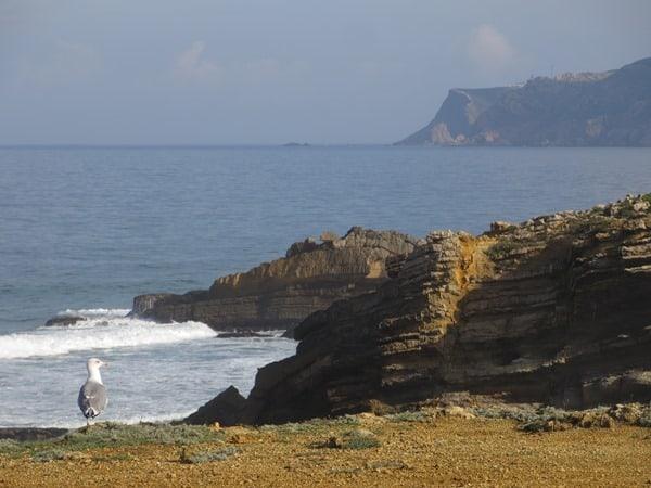 Cabo da Roca westlichster Punkt Europas Strand Möwe Portugal