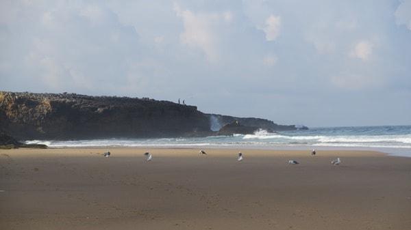 Strand Cascais Portugal Möwen