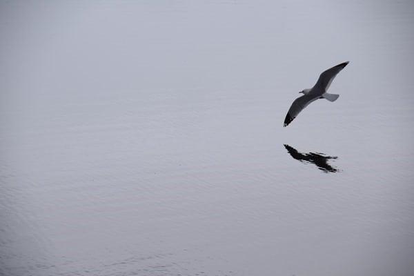 Möwe Vangsvatnet See Voss Vossevangen Norwegen