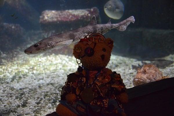 Jack Bearow Schatzkiste SeaLife Muenchen Piratensommer