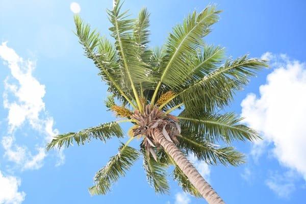 25_Palme-am-Traumstrand-Naturschutzgebiet-Marine-National-Park-Curieuse-Seychellen