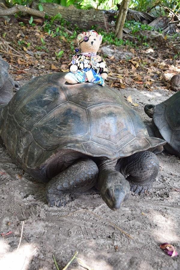 28_Maskottchen-Jack-Bearow-Riesenschildkroete-Naturschutzgebiet-Marine-National-Park-Curieuse-Seychellen