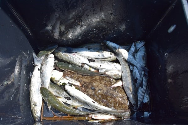 12_Bilancia-di-Bepi-Fischfang-Lagune-von-Marano-Lignano Sabbiadoro-Italien