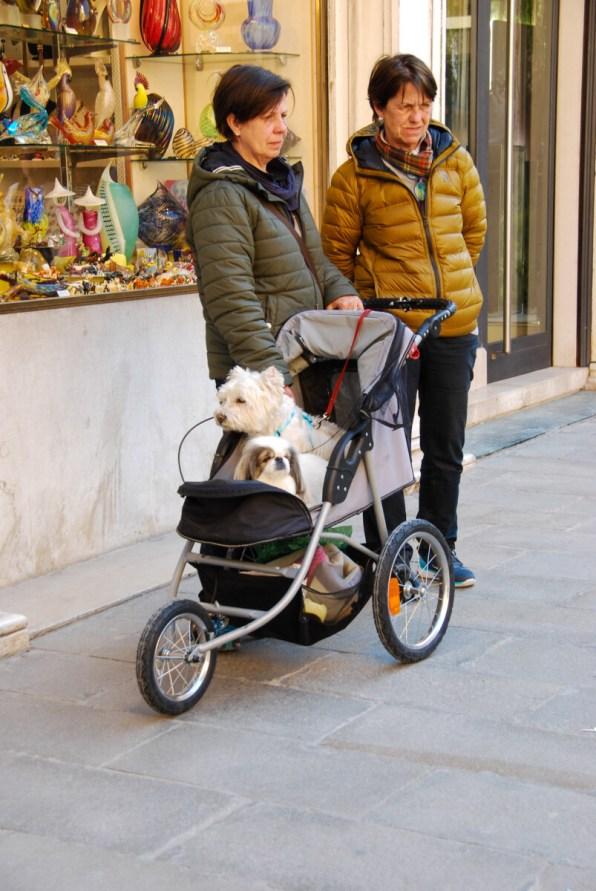 Venedig Kinderwagen Hunde