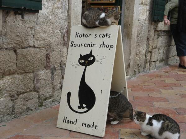 Die Katzen von Kotor Montenegro