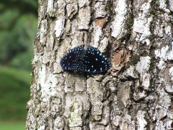 Palenque Mexiko Sehenswürdigkeiten Schmetterling Urwald