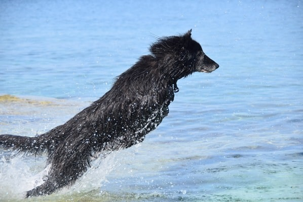 Naturpark Kap Kamenjak Urlaub mit Hund baden Istrien Kroatien
