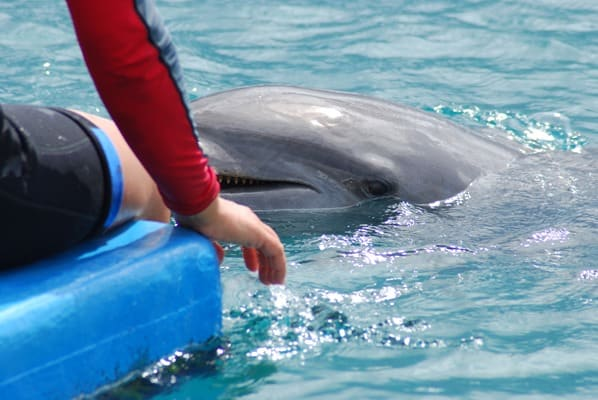 03_Delfin-Sea-Aquarium-Curacao-Dolphin-Academy-Karibik