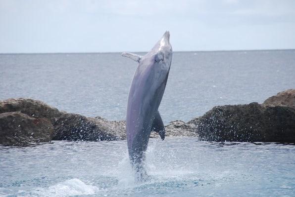 05_Delfin-rosa-Bauch-Sea-Aquarium-Curacao-Dolphin-Academy-Karibik