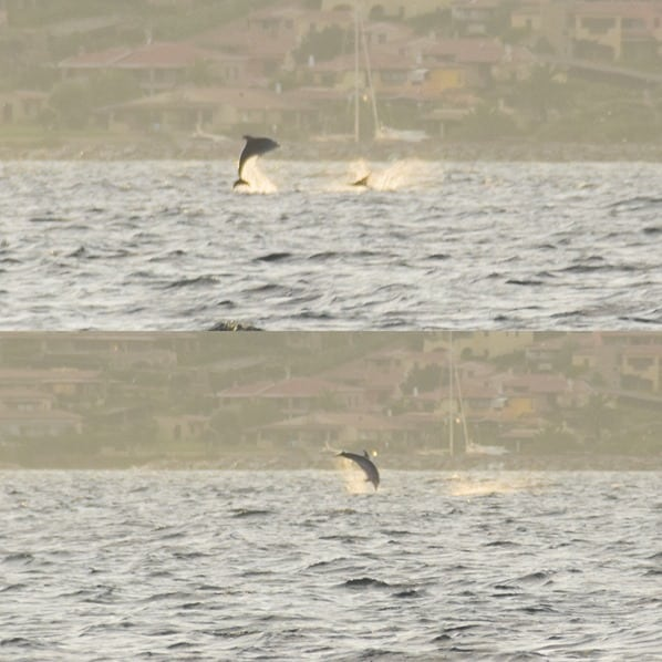 11_Delfin-Beobachtung-Golfo-Aranci-Olbia-Sardinien-Italien-Mittelmeer