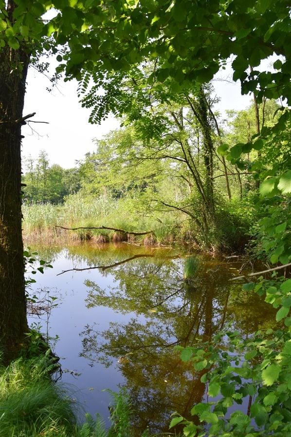 Arona Lago Maggiore Sehenswürdigkeiten Naturpark Parco Naturale Lagoni di Mercurago Teich Italien