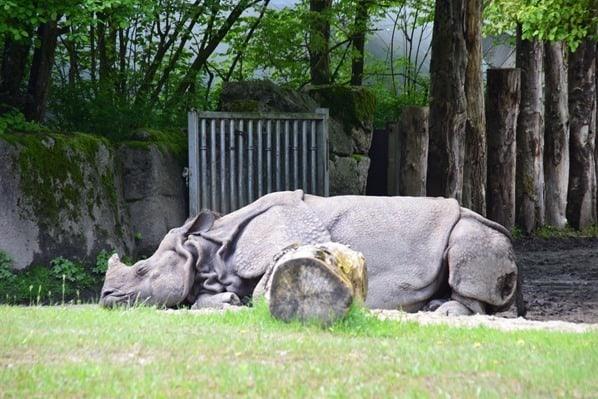 Nashorn Fotosafari Tierpark Hellabrunn Zoo Muenchen