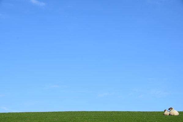 Nordsee Urlaub blauer Himmel Deich Schafe Friedrichskoog Dithmarschen Schleswig-Holstein Deutschland