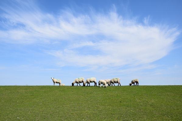 Nordsee Urlaub Wolkenwirbel blauer Himmel Deich Schafe Friedrichskoog Dithmarschen Schleswig-Holstein Deutschland