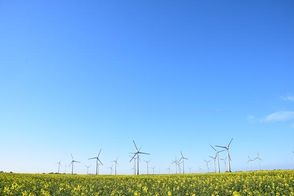 Schleswig Holstein Windpark Windräder Rapsfeld Blumen Dithmarschen Nordsee Urlaub