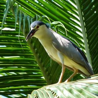 2011-03-17 Bali 025