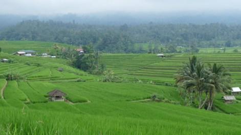 2011-03-18 Bali 107