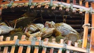 Frisch gefangen - Crabs