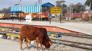 Stray animals rule railway tracks, install catchers at entry points