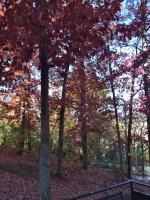 Fall at UGA