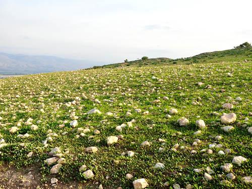 Rocks in the Jordan Valley at Meholah. Photo by Ferrell Jenkins.