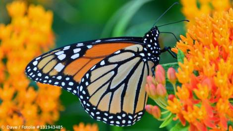 Butterfly. Courtesy of The Truth Discovery Project of Big Rapids, MI. https://www.facebook.com/events/1815622078703689/