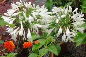 Exotische Pflanzen, Kübelpflanzen jetzt ins Wintequartier