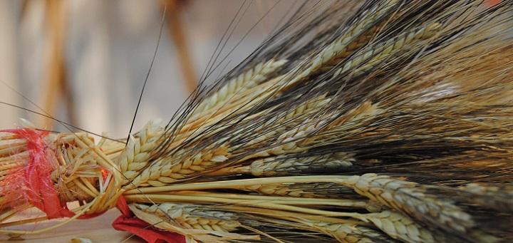 ANTEPRIMA FESTIVAL - Naturalmente Sardegna, una visita virtuale nel Padiglione Food di Scirarindi 2018