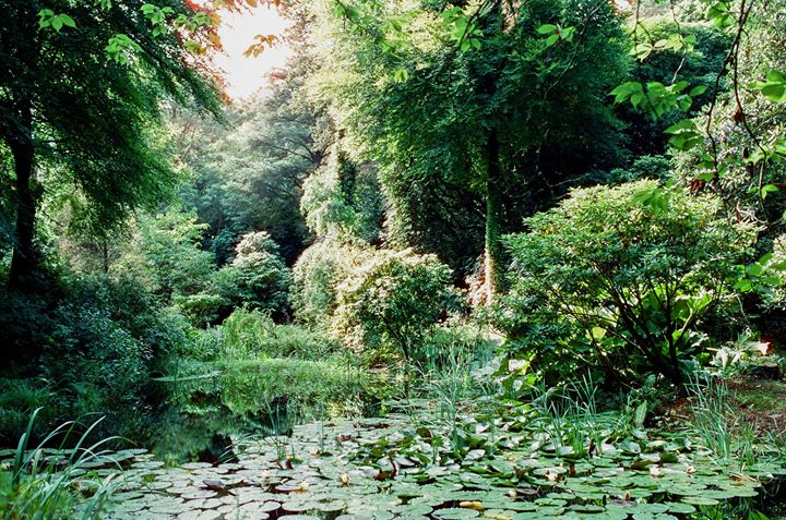 In 1999, The Wyevale Portmeirion Garden won a Gold Medal at the RHS Chelsea Flow...