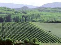 La Raia, Cascina del Melo organic vineyards