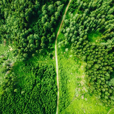 Aerial view of green trees and a trail