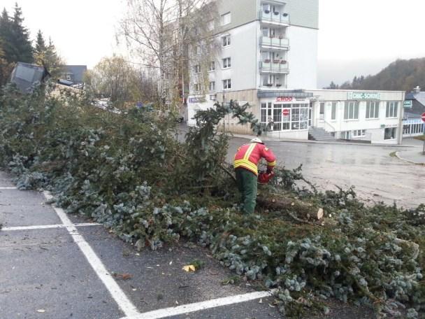 Baum Heinrich-Scherer-Platz