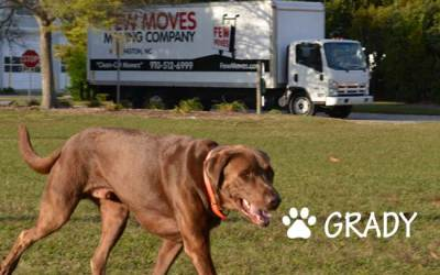 Wilmington NC Pet Boarding: Where To Take Your Pets While You Move