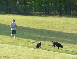 Flaherty Dog Park in Durham