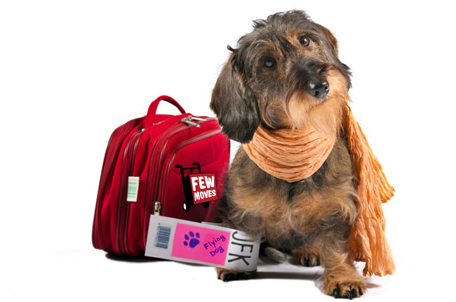 Raleigh NC Pet Boarding –  Where to Board Your Pet Before a Move