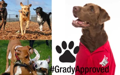 Grady Approved Dog Parks – Raleigh NC