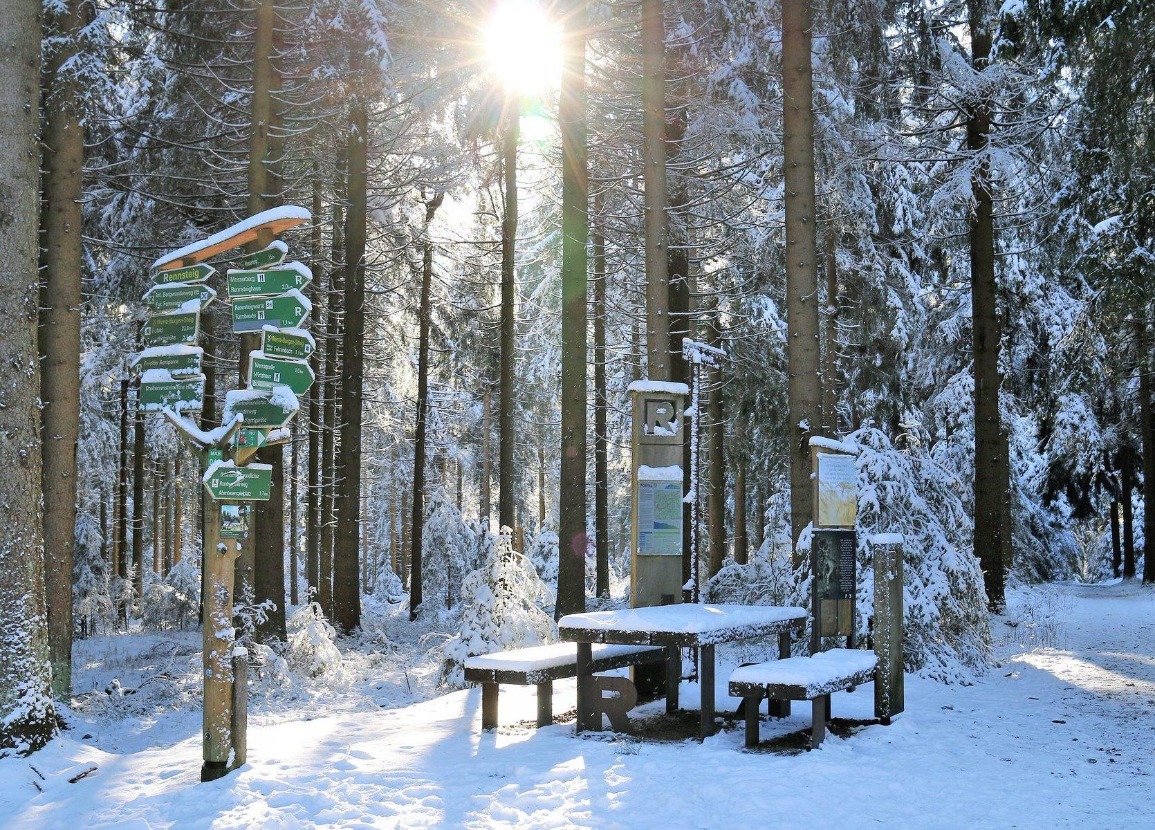 Winterwald in Thüringen (Rennsteig)
