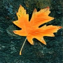 leaves16_03
