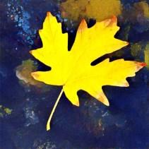 leaves16_05