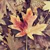 leaves16_13
