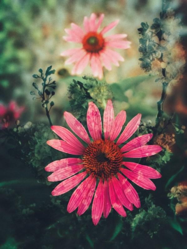 flower-summer