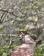 petaluma_hike_09