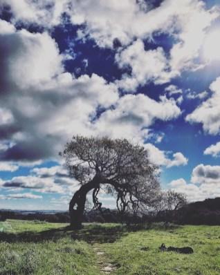 petaluma_hike_12